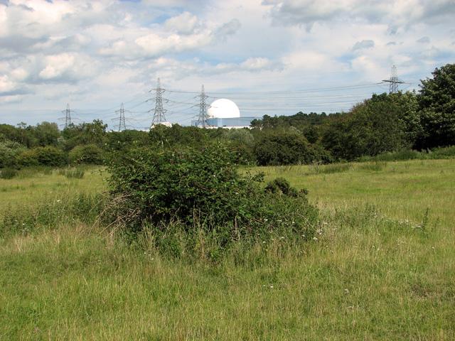 View across Broom Covert