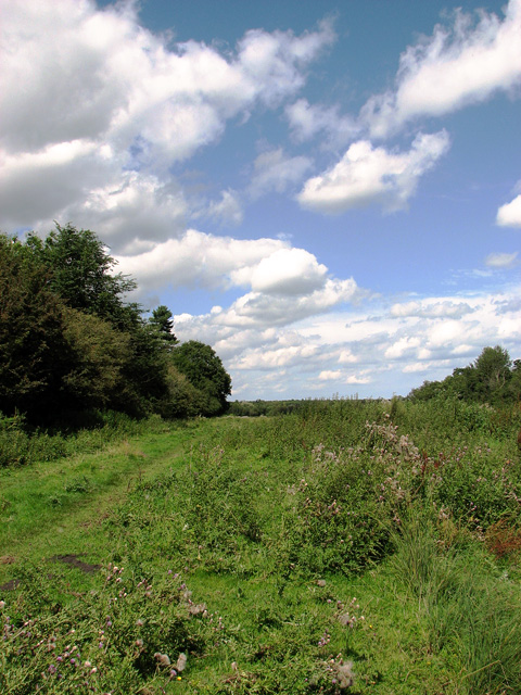 Track past Rookyard Wood, Sizewell