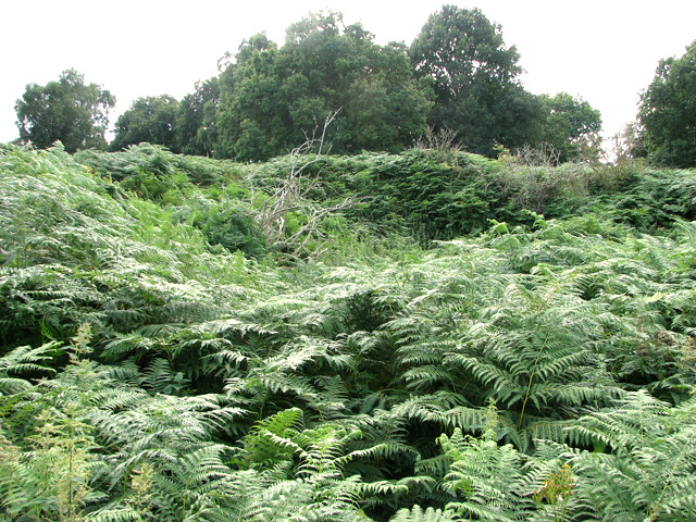 Disused pit by Reckham Pits Wood, Leiston Common