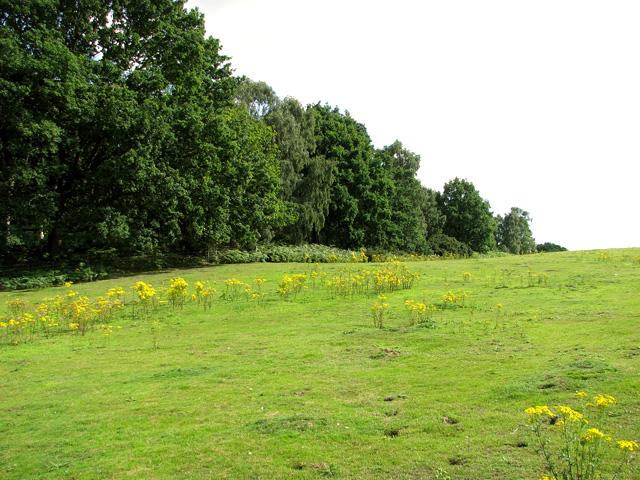 Reckham Pits Wood, Leiston Common