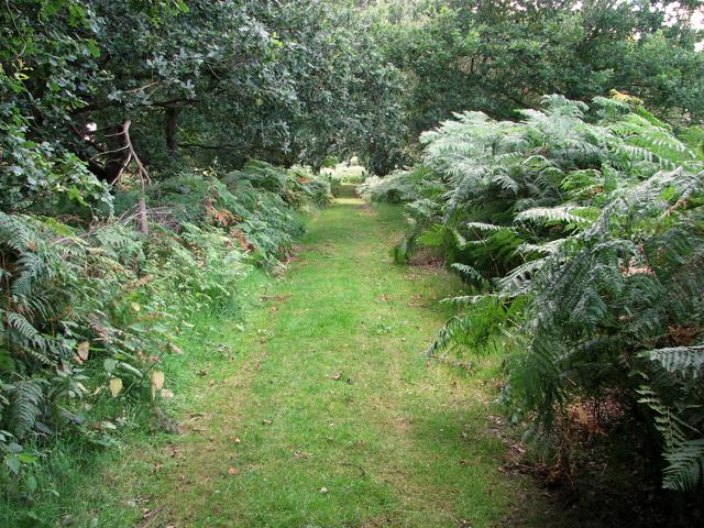 Footpath to Leiston Common