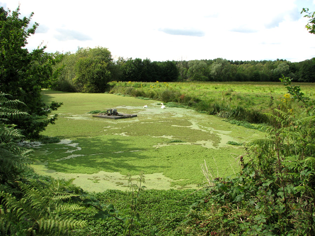 Algae-infested ditch on Sizewell Belts