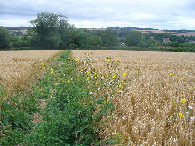 Footpath to Bishop's Sutton