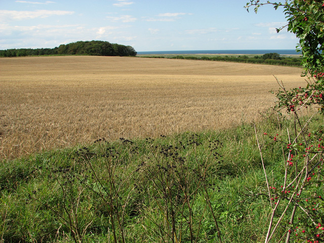 Harvested field by Crockley's Plantation, Cley