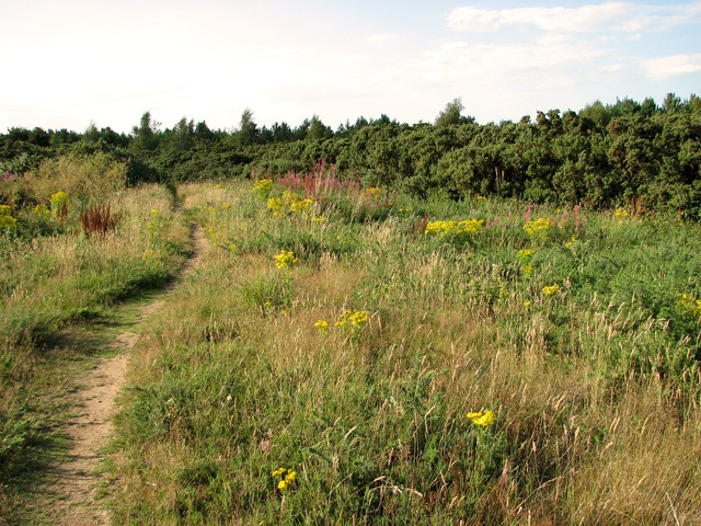 Narrow path on Wiveton Downs
