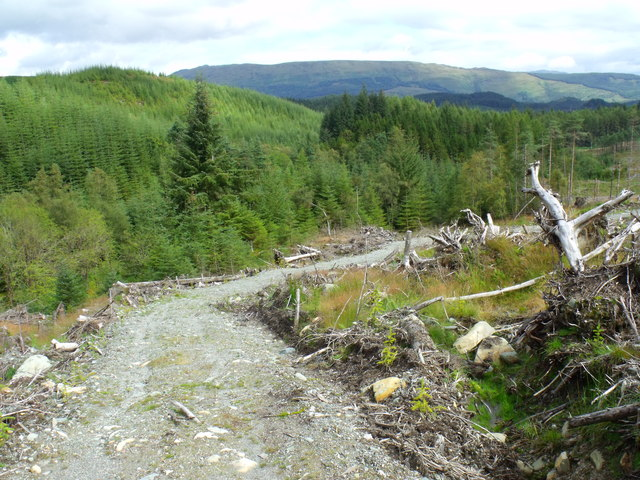 Service track through clearfell in Loch Ard Forest near Aberfoyle