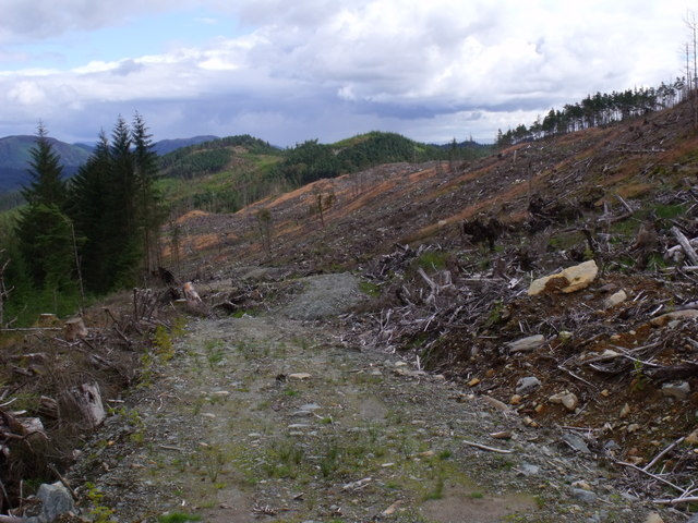 Service path through clearfell in Loch Ard Forest near Aberfoyle