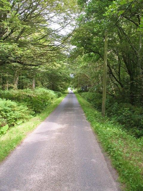 Road through woodland, Gigha