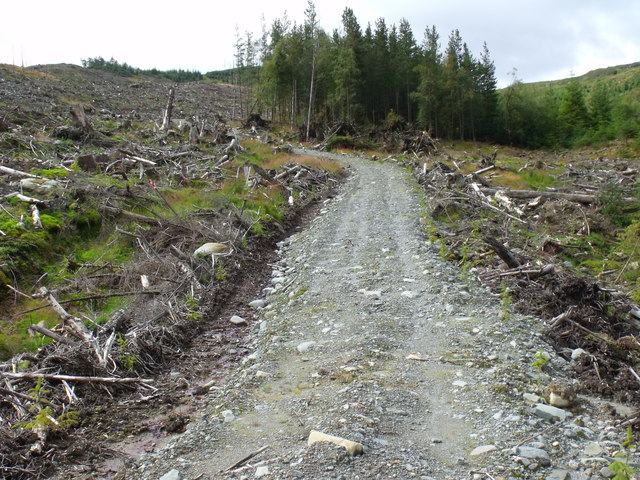Clump of mature trees by service path in Loch Ard Forest near Aberfoyle