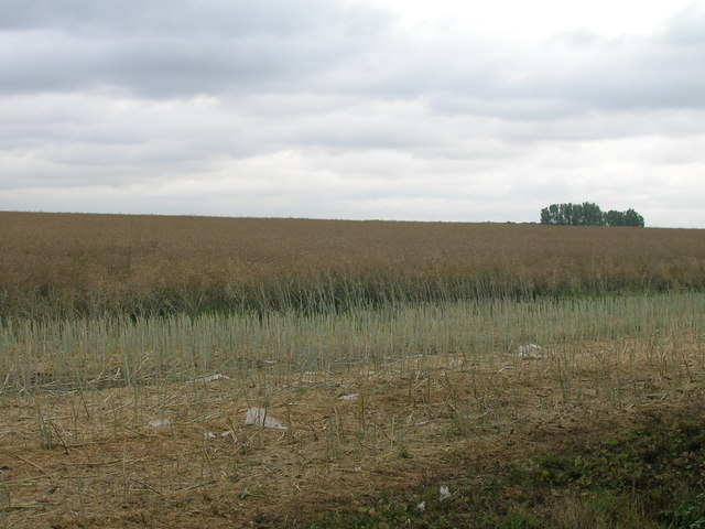 Farmland off Rakes Lane