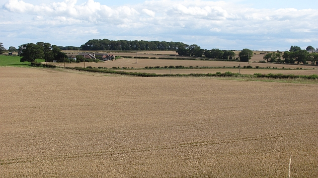 Wheat field near Bamburgh