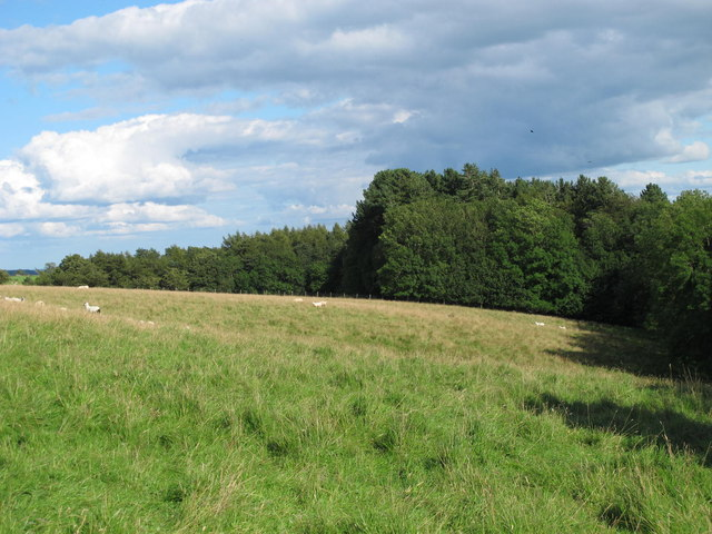 Pastures and woodland north of West Dipton Burn