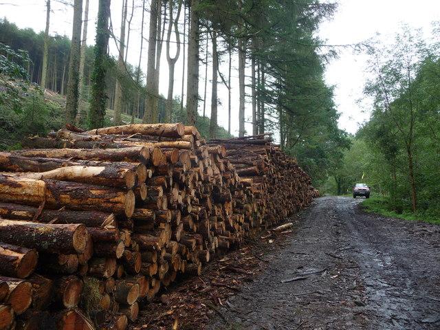 Log stack in Cwm yr Argoed