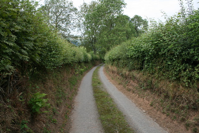 High Hedgerows near Stoney Pound