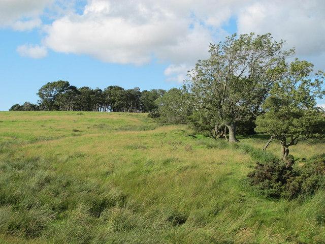 Farmland south of Watch Currock Farm