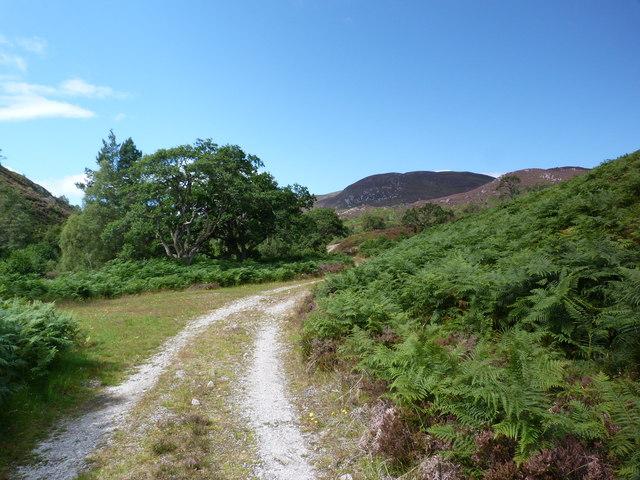 Track along Neaty Burn