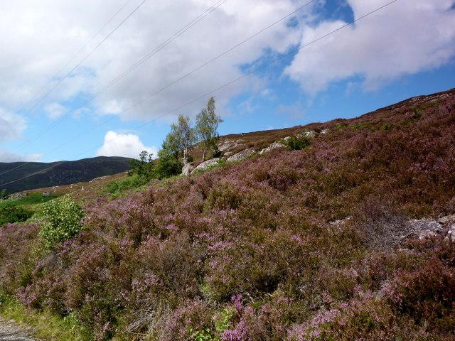 Blooming heather by Neaty Burn