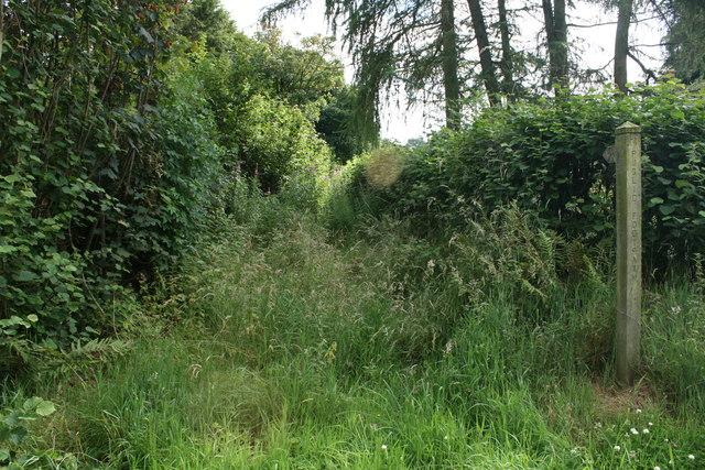 Overgrown footpath near Hongrass