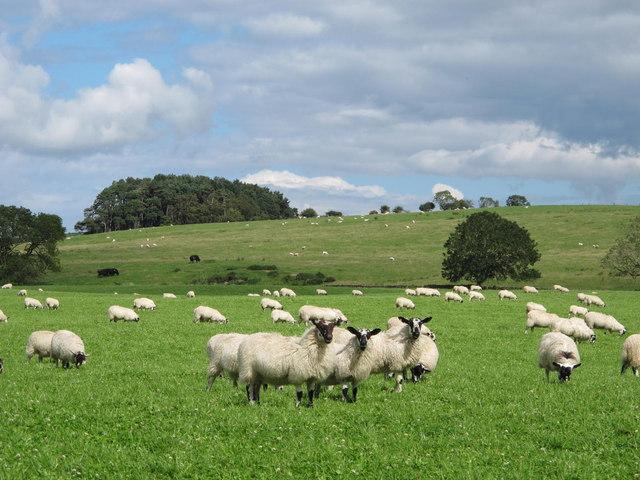 Farmland east of Nubbock Lodge Wood