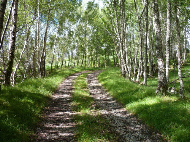 Track through the Birches at Culligran