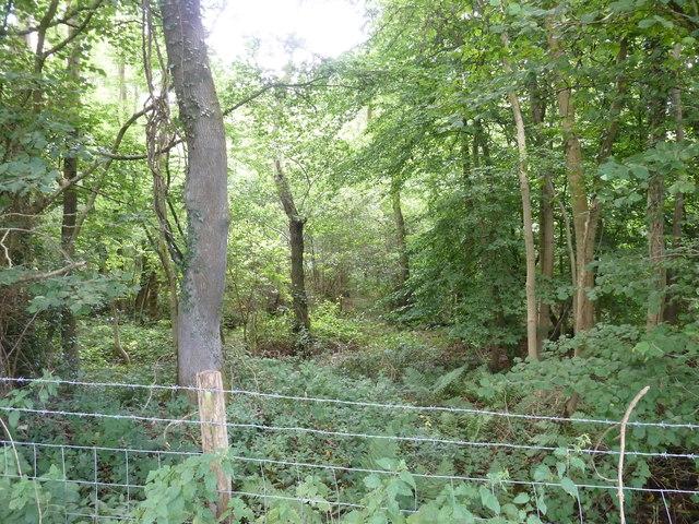 Court Wood off Park Lane