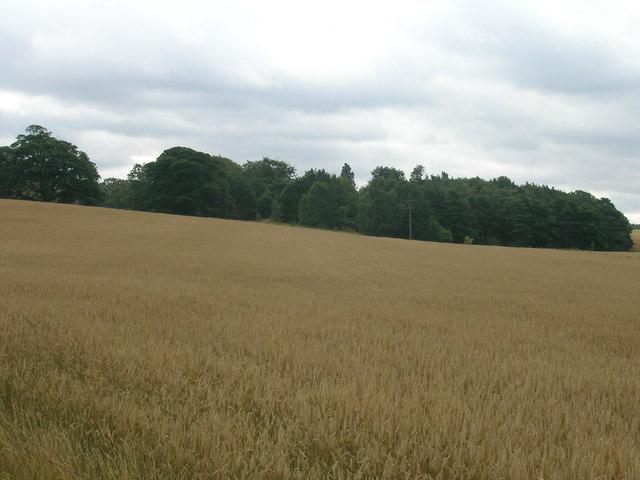 Farmland near Northern Racing College