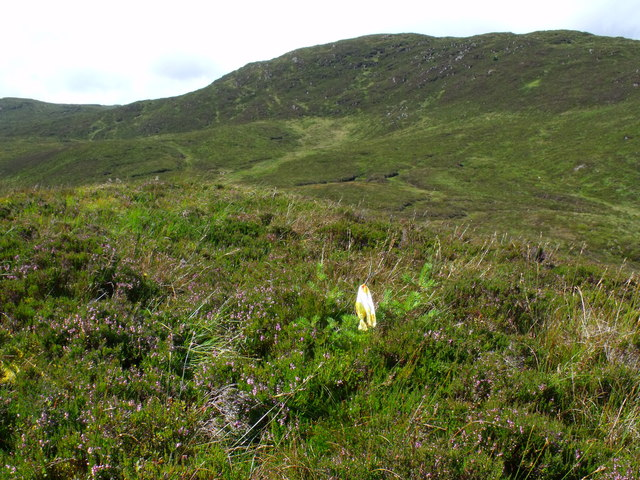Tagged sapling Scots Pine on ridge north-east of Stob a' Choin Duibh near Aberfoyle