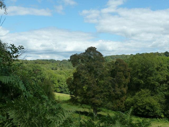 Tree top view from path in Pole Platt