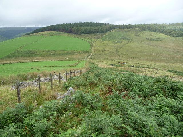 Cattle on the hillside below Foel Penycastell