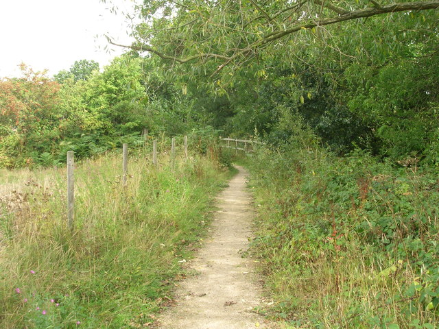 Footpath beside woodland
