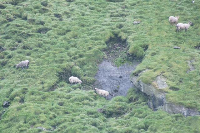 Sheep on Boreray, St Kilda