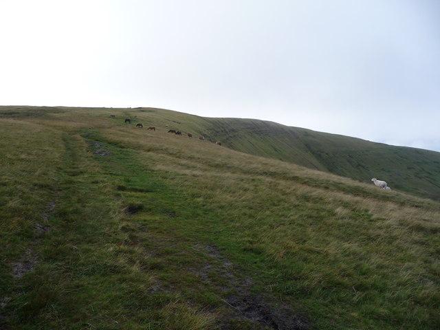 Path ascending Cefn yr Henriw