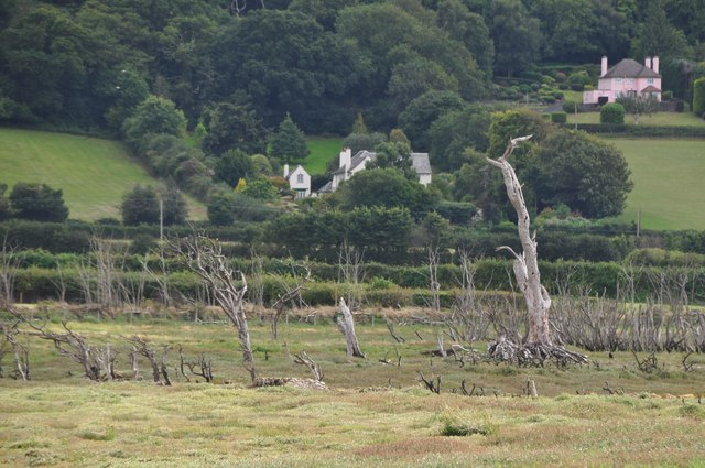 West Somerset : Bare Trees