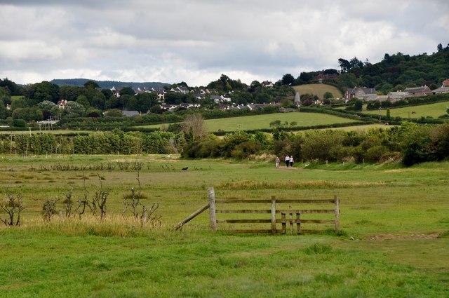 West Somerset : Grassy Fields