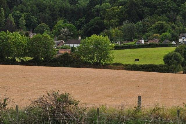 West Somerset : Farm Field