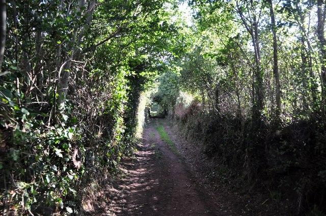 West Somerset : Courtmead Lane