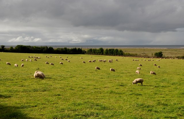 West Somerset : Field of Sheep