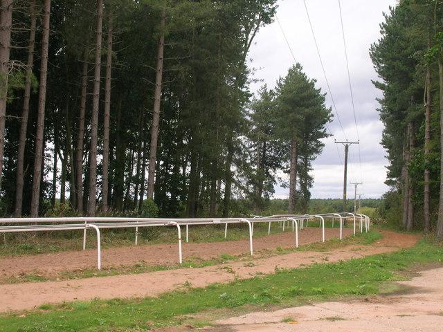 Horse gallops, Martin Hall