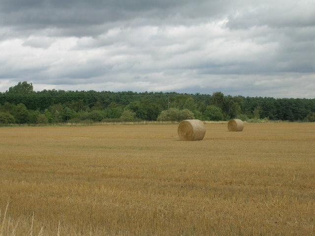 Farmland towards Bawtry Forest