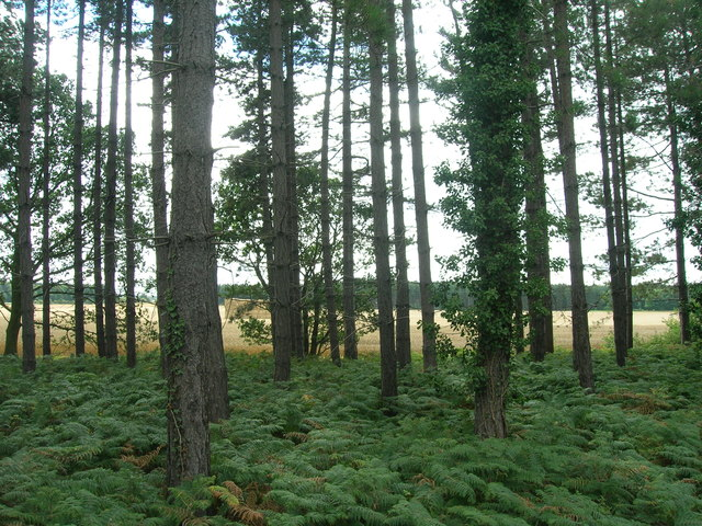Trees beside the B6463