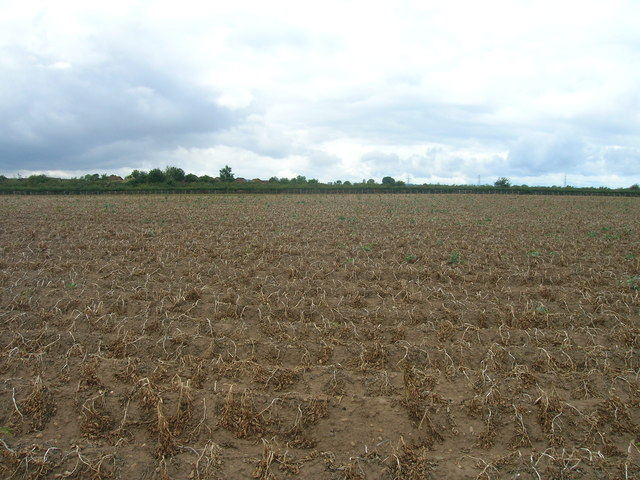 Potato field off Common Lane