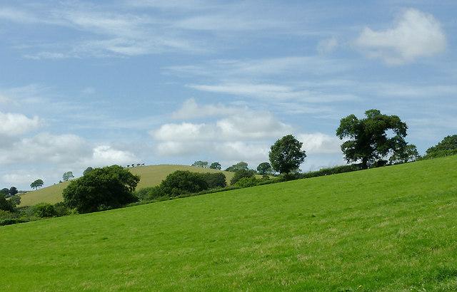 Pasture west of Llwyn-y-Groes, Ceredigion