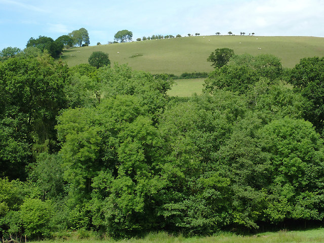 Woodland west of Gartheli, Ceredigion