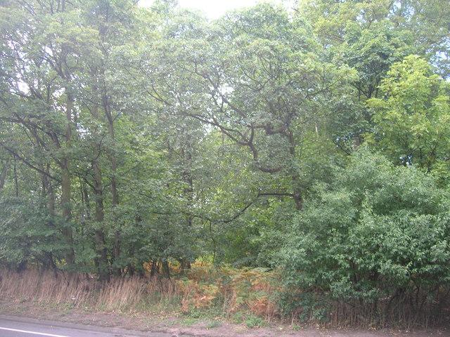 Nook Flatt Wood