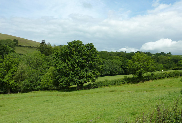 Pasture and woodland west of Llwyn-y-Groes, Ceredigion