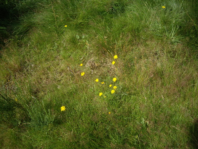 August flora, Feughside picnic spot