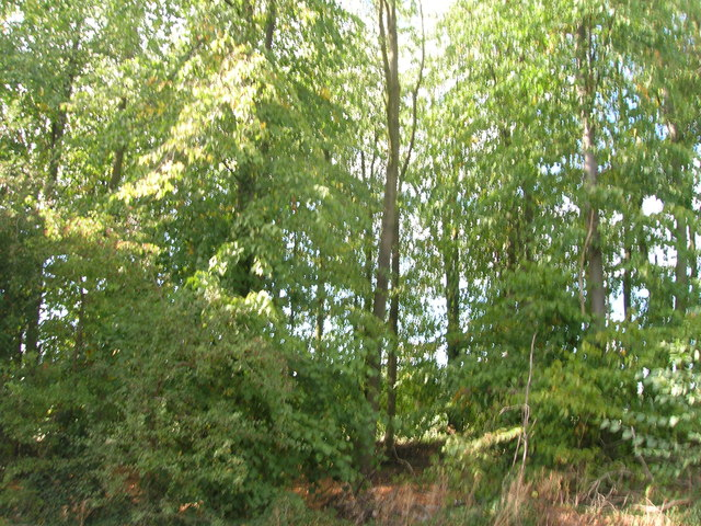 Woodland beside the B6045