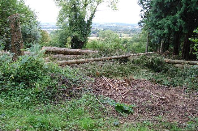 Felled Trees near Tarrington Common