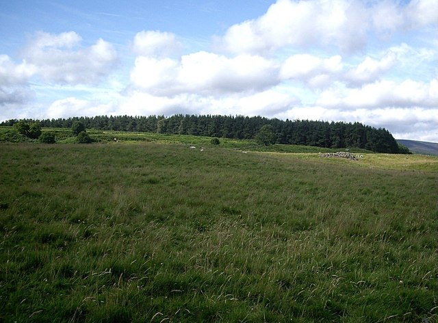Rough pasture near Cuttieshillock
