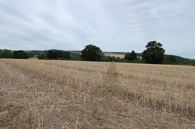 Footpath across harvested field of rape seed